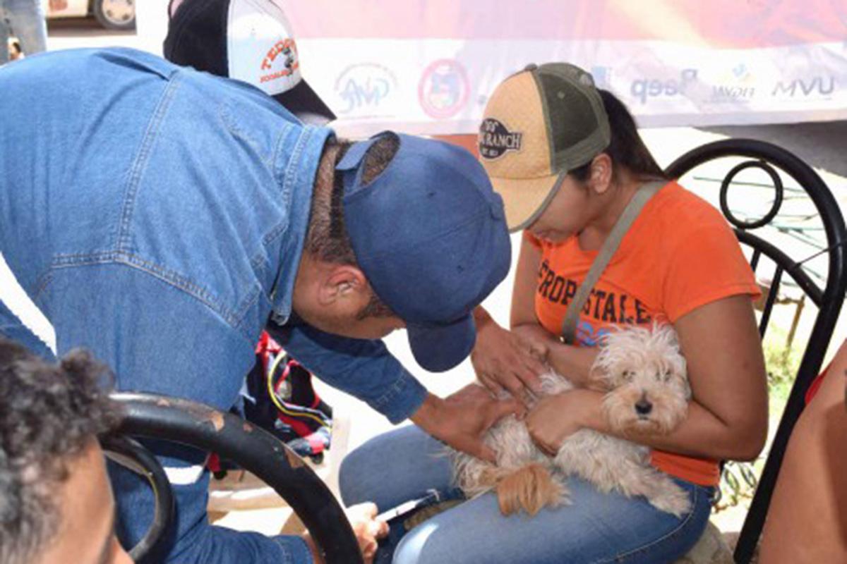 salud_canina